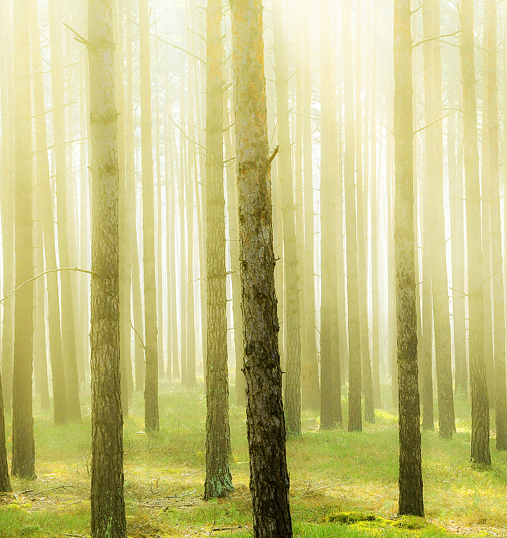 фотообои лес интернет магазин сейчас можно